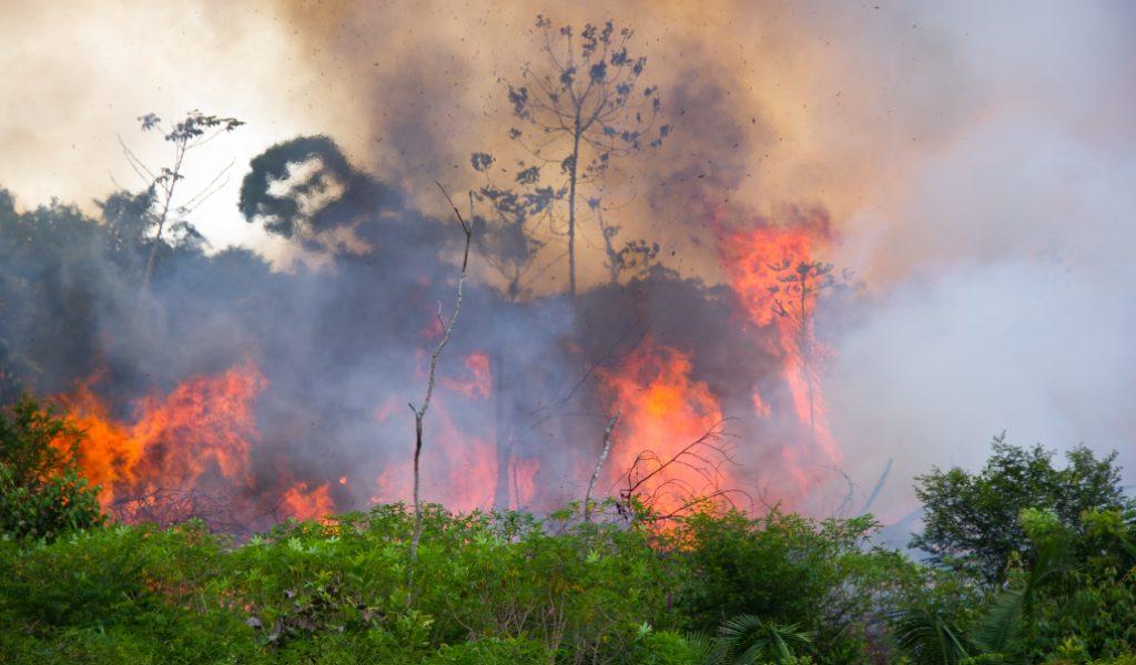 Amazzonia che sta bruciando
